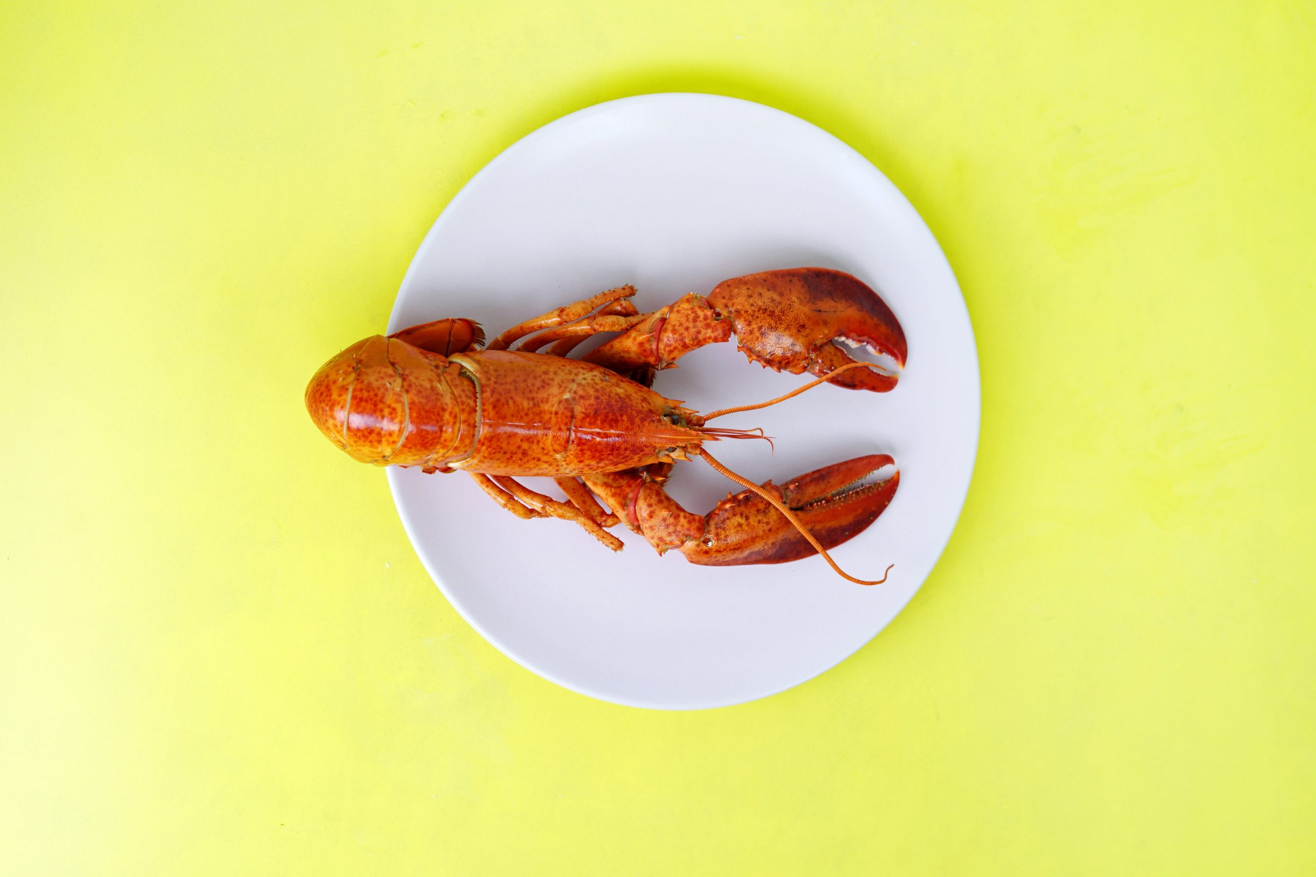 A red lobster on a white plate against a yellow background